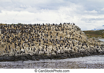 Birds - Cormorant Colony