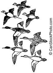 Birds - Flock of birds flying