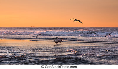 Birds early morning on the oceanfro