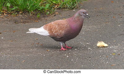 Birds eating bread crumbs - The birds found the remains of ...