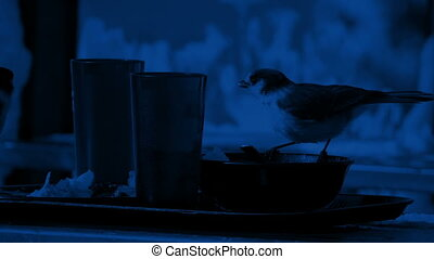 Birds Eating Left Overs On Table At Night - Couple of birds...