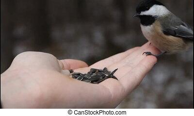 Birds eating sunflower seeds