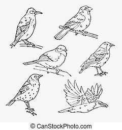 Birds engraved style. Stamp, seal. Simple sketch. - Birds...