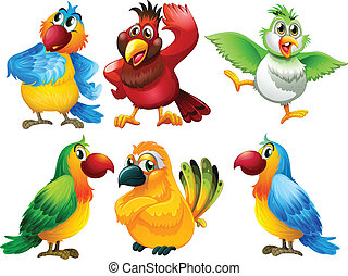 Birds - Illustration of different color of parrots