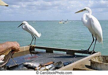 Birds eye fish cleaning process