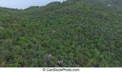 Birds eye view of forest - A birds eye view shot of the...