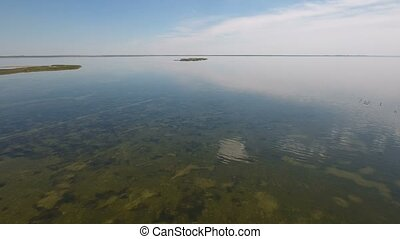 Bird`s eye view of green weeds on the shoal of Dzharylhach...