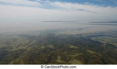Bird`s eye view of multicolored weeds on the shoal of...