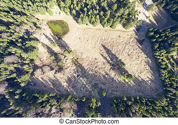 birds eye view to mountain meadow with small tarn and forest...