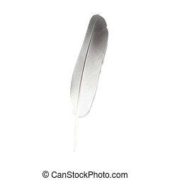 Bird's feather