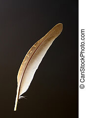 Bird's feather of Japanese quail