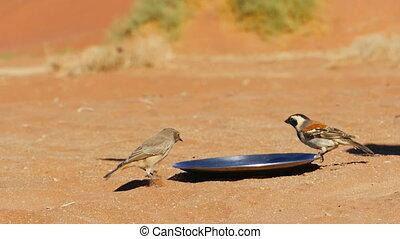 birds feed slow motion - birds feeding from a metal plate in...