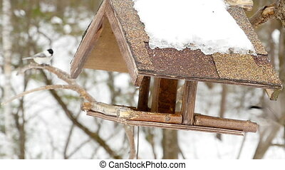 Birds feeder in the park - Birds eating seeds from the...