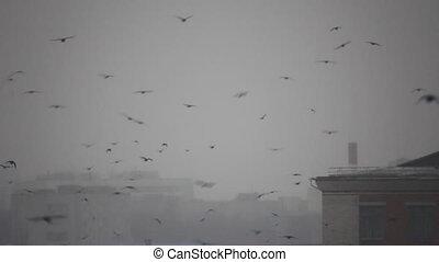 Birds flight in snowy town