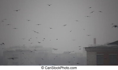 Birds flight in snowy town
