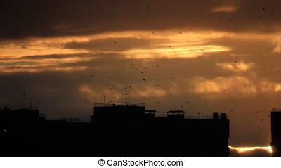 Birds flight over town