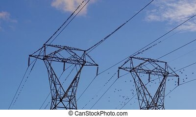 Ravens on electrical wires flock on electric pylon and fly off as hawk flies close