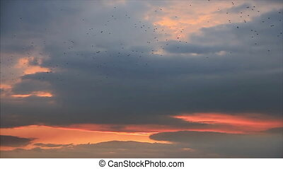 Birds flock migrate at twilight cloudy sky background