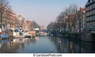 Birds Flocking Around Scenic Canal - Countless seagulls...