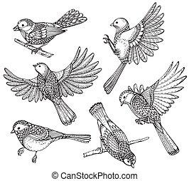 birds., florido, conjunto, dibujado, mano