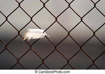 Birds Flu Outbreak - WESTERN NEGEV - MARCH 19: All that...