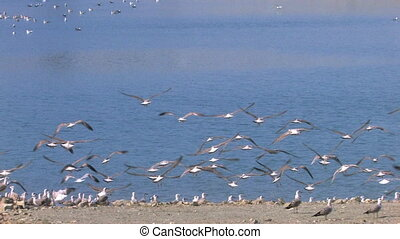 birds fly away from the sandy shore of the lake, Canon XH...