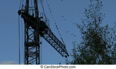 crane - birds fly away, the crane