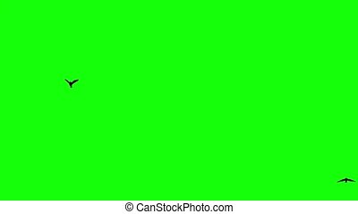 birds fly from horizont on green screen