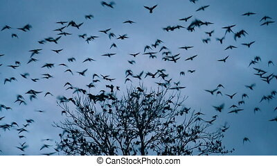 Birds Fly From Tree Scare Shock Flee Escape at dusk