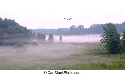 birds fly in a foggy forest