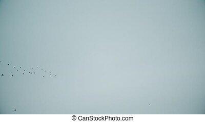 Birds fly in symmetric V-formation in blue sky - Birds fly...