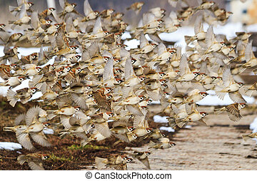 birds fly in winter with a flock