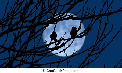 Birds Fly Off Branches In The Evening With Moon In Distance