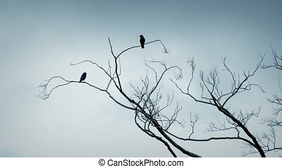 Birds Fly Off Tree Branches