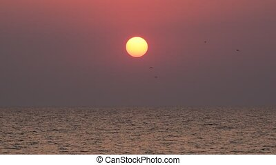 Birds fly on background of rising sun over sea at dawn