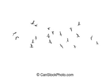 Birds fly on clear sky (b&w)