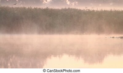 birds fly over a misty lake, autumn period