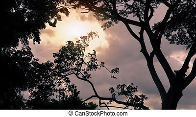 Birds Fly Past Sunrise In Jungle