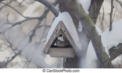 Birds fly to the bird feeder in winter