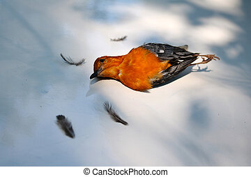 Birds fly to the glass and lying dead on the ground.