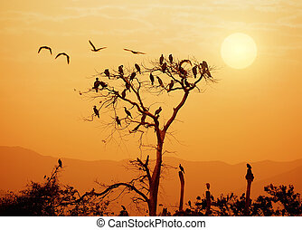 Birds flying above the sunset