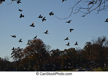 Birds flying above the trees