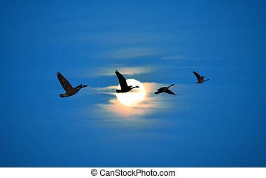 Birds flying against blue sky ecology concept