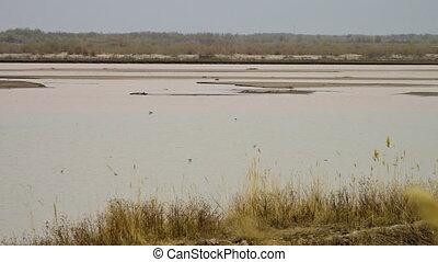Birds Flying Around Shallow Pond - Steady, medium wide shot...