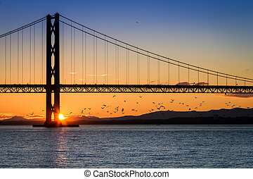 Birds flying at sunset under the bridge in Scotland