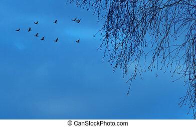 Birds flying away autumn concept