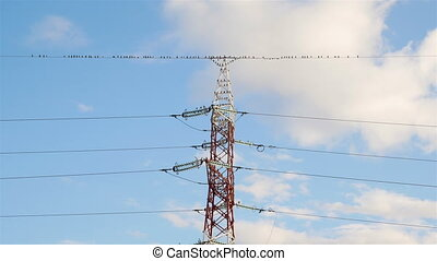 Birds flying away from electric wire. - Many birds on the...