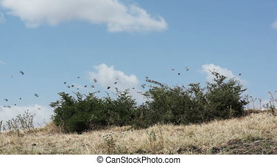 Birds flying from bushes - A lot of small birds flying away...
