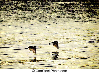 Birds flying in sync - Two birds flying in sync at sunset -...