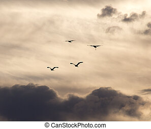 birds flying in the sky at dawn